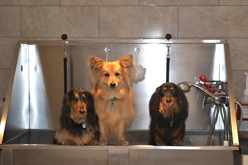 Moblie Pet grooming