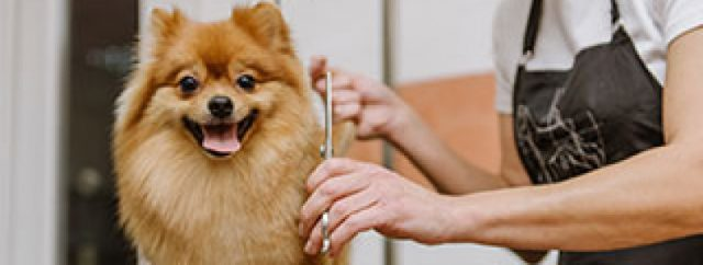 Miami Dog Grooming Tips and Strategies for Beginners