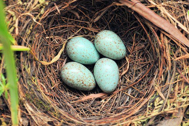 Bird's Nest Shop –All About It InSingapore